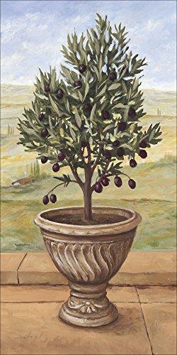 Artland Qualitätsbilder I Wandbilder Selbstklebende Premium Wandfolie 30 x 60 cm Botanik Pflanzen Topfpflanze Malerei Grün A1TQ Olivenbaum