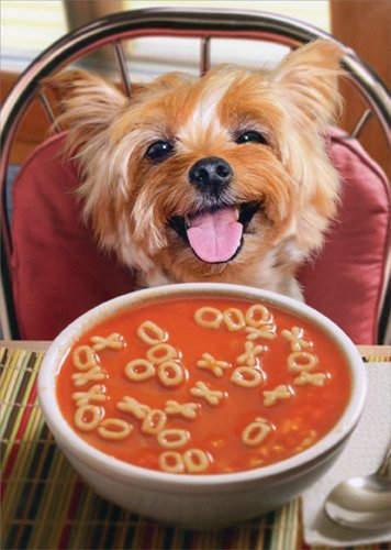 Dog Get Well Soup - Avanti Funny Get Well Card