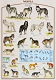 International Publishing Art Stones - Puzzle de Lobos (1000 Piezas)