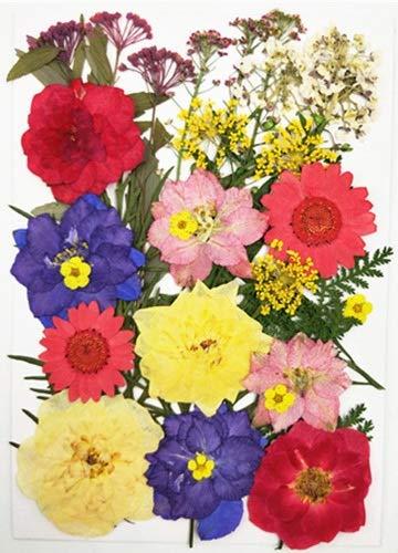 PNLD Flores prensadas pequeñas flores secas para álbumes de recortes de recortes en seco para decoración del hogar (color: n.º 7)