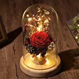 Jamicy  Rosa Artificial Decoración para el Hogar LED Micro Paisaje Regalo Rosa Ramo Decoración (Rojo)