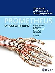 PROMETHEUS - der Lernatlas der Anatomie