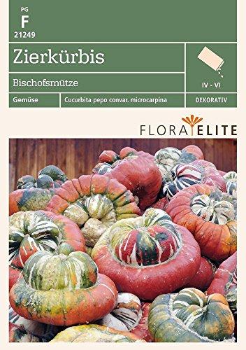 Flora Elite 21249 Zierkürbis Bischofsmütze (Kürbissamen)