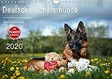 Deutsche Schäferhunde Seelentröster (Wandkalender 2020 DIN A4 quer)