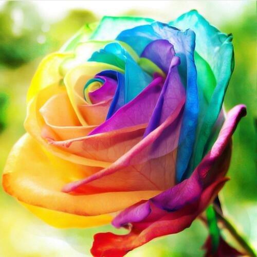 ! Verlust Promotion RED Fackel-Ingwer-Pflanze Blumensamen - Etlingera elatior - Perfekte Zimmerpflanze - EXOTISCHEN und genießbarer, 100 Samen / Packung