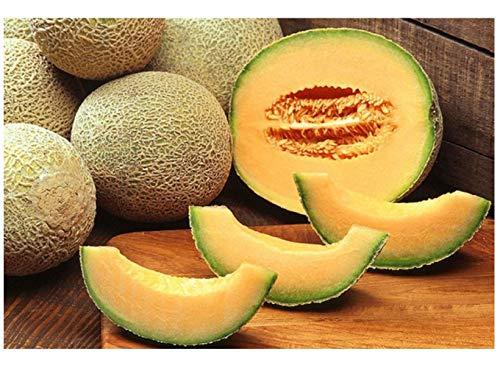 Premier Seeds Direct MEL03 Semi di melone cantalupo cuore d'oro (confezione da 100)