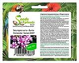 Stk - 40x Securigera varia Bunte Kronwicke Hybrid Pflanzen - Samen #307 - Seeds Plants Shop Samenbank Pfullingen Patrik Ipsa