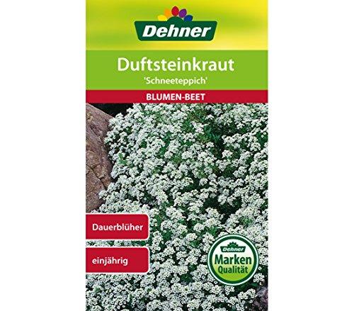Dehner Blumen-Saatgut, Duftsteinkraut,
