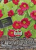 Kresse - Kapuzinerkresse Whirlybird Rose von Sperli-Samen
