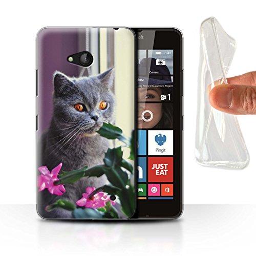 Stuff4 Gel TPU Hülle/Case für Microsoft Lumia 640 / Britisches Blau/Kurzes Haar Muster Katze/Katzenrassen Kollektion