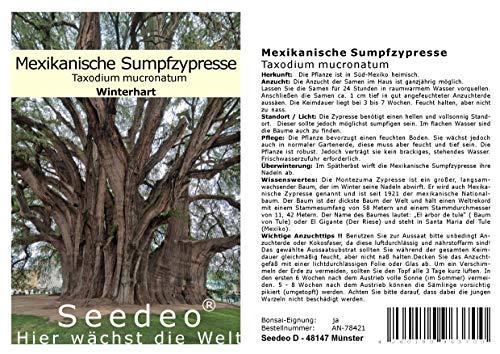 Seedeo Mexikanische Sumpfzypresse (Taxodium mucronatum) 60 Samen