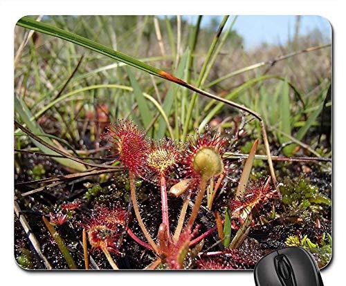 25X30cm Maus Matte Maus Pad - Sonnentau Pflanze Fleischfressende Natur Makro Grüne Flora