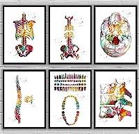 スケルトントルソスカルビュー脊椎椎骨歯乳房歯構造解剖学医学および科学キャンバスポスター装飾30X40cm12x16inchx6フレームなし
