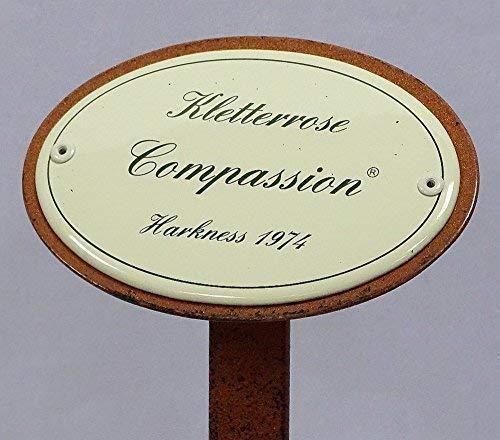 Rosenschild, Rosenstecker Emaille, Kletterrose: Compassion, Harkness 1974