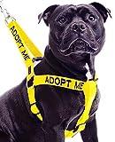 Dexil Adopt ME (I Need A New Home) - Arnés para Perro L-XL con código de Color Amarillo Que Evita Accidentes por Advertencia a Otros de su Perro por Adelantado