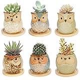 Colmanda 6 Pack Mini Macetas Ceramica, Búho Macetas para Cactus de Cerámica, Set Macetas Suculentas con Desagüé para Mesa de Comedor Sala de Estar, Casa y Jardin Boda Decorativos Interior (A)