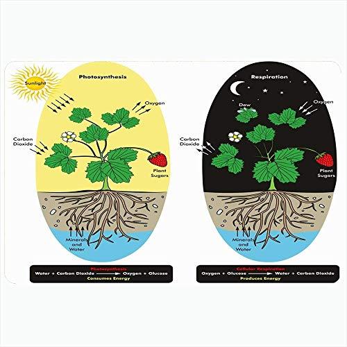 Badteppich für Badezimmer rutschfeste Matten Photosynthese Dioxid Tau Baum Kohlenstoff Zellatmung Prozess Pflanze während der naturwissenschaftlichen Ausbildung Plüsch Dekor Fußmatte rutschfeste Träge