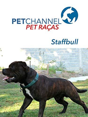 Pet Raças - Cães Staffordshire Bull Terrier