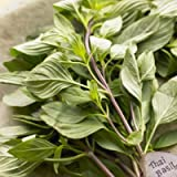 Thai Sweet Basil Fresh 14 oz.