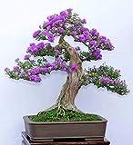 Mini Bonsai Tree Kit Instructions