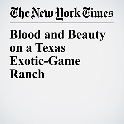 Blood and Beauty on a Texas Exotic-Game Ranch copertina