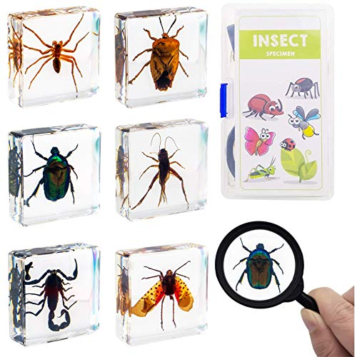 ELifeBox 6 PCS Insect Specimen Set, Spider/Scorpion/Cricket/Flower Chafers/Stink Bug/Spotted Lanternfly Resin Collection Science Toys