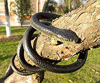 Lifelike Rubber Fake Snake Prank Realistic Fake Rubber Toy Snake Flexible Black Fake Snakes 50inch Long Scare Prop for Hal...