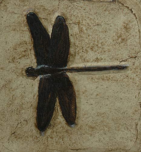 Replik einer Libelle aus Solnhofen; Nachbildung in Museums Qualität; Fossilien Abdruck, Replikat Tierfossilien Insekten Tiere Tier Fliese