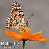 Butterfly (Original Mix)