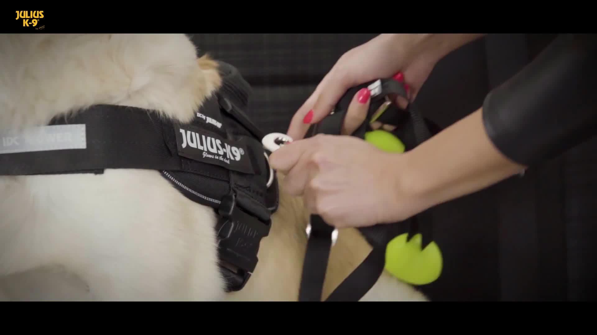 Julius K9 16sd Stopdog Autoleine Für Hunde Haustier