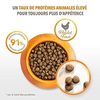 IAMS Vitality - Croquettes Super Premium Chatons - savoureuses complètes équilibrées - Favorise Croissance et Vitalité - Au poulet frais – Sans OGM colorant arôme artificiel - Sac refermable de 1,5 kg
