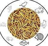 Hunde Helden Mehlwürmer 15 Liter Premium Snack für Vögel, Fische, Reptilien, Schildkröten, Igel