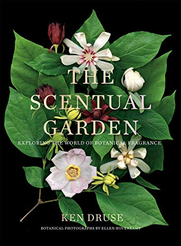 Compare Textbook Prices for Scentual Garden: Exploring the World of Botanical Fragrance  ISBN 9781419738166 by Druse, Ken,Hoverkamp, Ellen