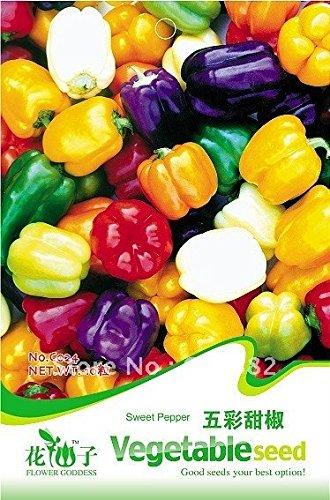 3 Packs 60 de Sweet Pepper Seeds, Colorful Seed ornemental Pepper C024