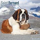 Saint Bernard - Bernhardiner 2022 - 16-Monatskalender: Original Avonside-Kalender [Mehrsprachig] [Kalender]: Original BrownTrout-Kalender [Mehrsprachig] [Kalender] (Wall-Kalender)