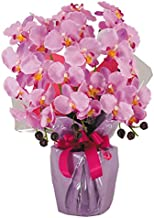 神戸花物語(Kobe Flower Story) 胡蝶蘭 cotyoran-3-lv 本体: 高さ60cm 本体: 幅45cm