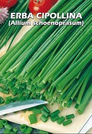 ERBA CIPOLLINA (Allium schoenoprasum) - SEMI
