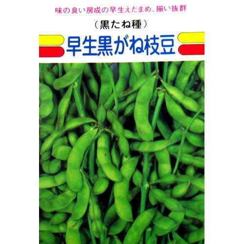 枝豆 種 早生黒がね 小袋(約1dl)