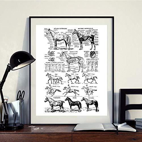 Terilizi paard print zwart en wit medisch medisch poster paard anatomie afbeelding muurkunst afbeelding canvas schilderij wand deco 40 x 50 cm geen lijst
