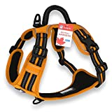 CUDDLY PET®, Dog Harness No Pull, Walking Pet Harness with 2 Metal Rings