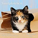 Samtpfötchen 2020 - Broschürenkalender - Wandkalender - Katzenkalender - mit herausnehmbarem Poster - Format 30 x 30 cm