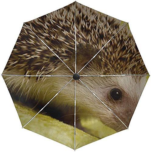 Automatisches Regenschirm-Igel-Liegendornen-Hintergrund-Reise-bequemes winddichtes wasserdichtes faltendes Auto öffnen Sich nah