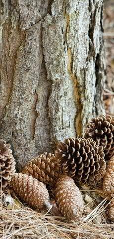 Textilbanner - Thema: Weihnachten - Tannenzapfen im Wald - 180cmx90cm - Banner zum Hängen & Dekorieren