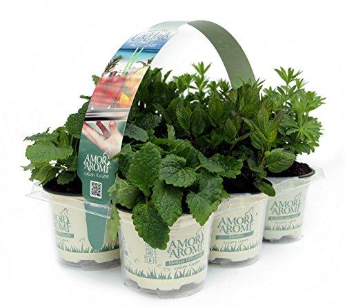 Piante aromatiche N. 24 vasi in 4 pack diversi (in vaso diam.9cm)