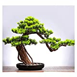 ffshop bonsái Artificial Simulación China Bonsai Faux Plantas, Belleza Artificial Decoración de Pino Pórchico Sala de Estar Tabla de té, 18 Pulgadas de Altura para decoración