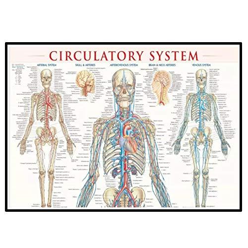 Swarouskll Diagrama del sistema circulatorio humano, pintura
