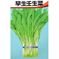 壬生菜 種 早生壬生菜 小袋(約7ml)