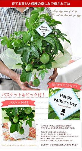 『花由 父の日限定 パッションフルーツ 実付き(5号 鉢植え)』の4枚目の画像