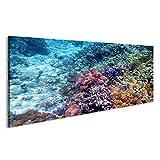 islandburner Bild auf Leinwand Bunte Korallenriff mit