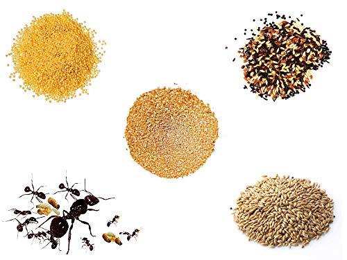 Anthillshop.es Vollständiges Ersatz-Kit für Sand-Ameisenfarm - Ameisen mit Königin Free - (Ameisen mit Königin Free)